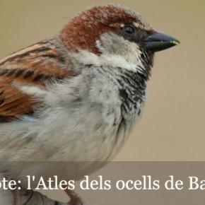 Participa en l'Atles dels ocells de Barcelona