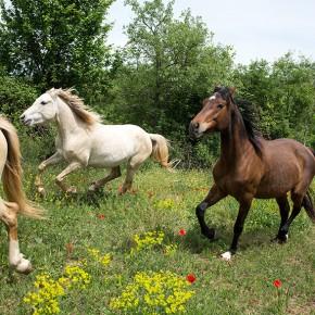La microfoto de la setmana (3) Una protectora de cavalls